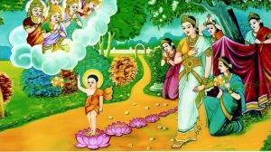 Sự tích 7 Đóa Sen vàng nâng gót tịnh - Phật đản VESAK 2019